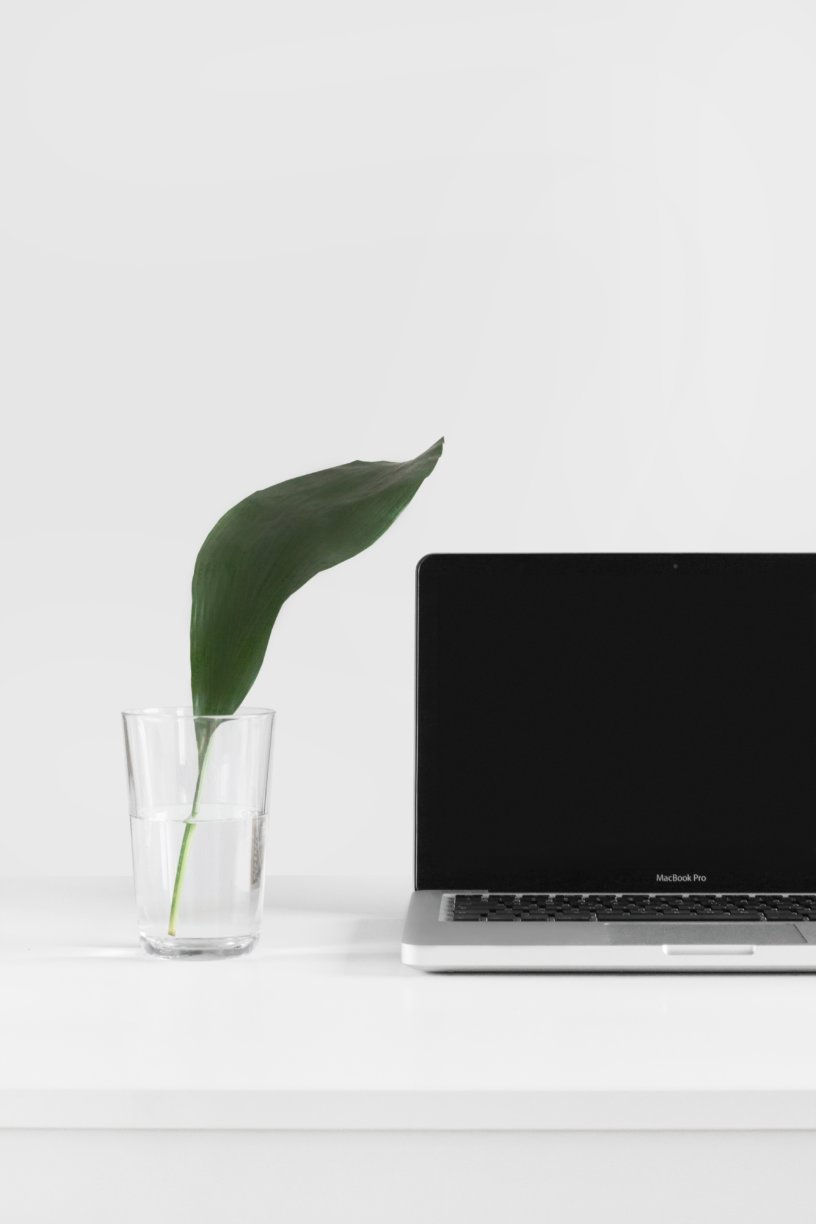 small plant by laptop